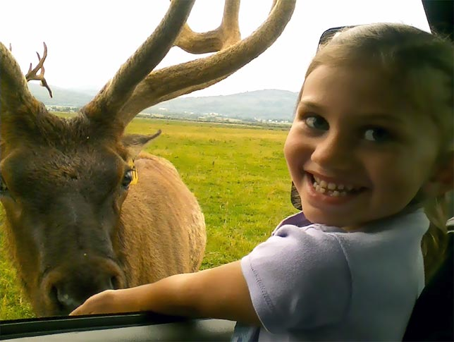excited little girl encountering a elk up close.
